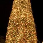 gal_tree_01
